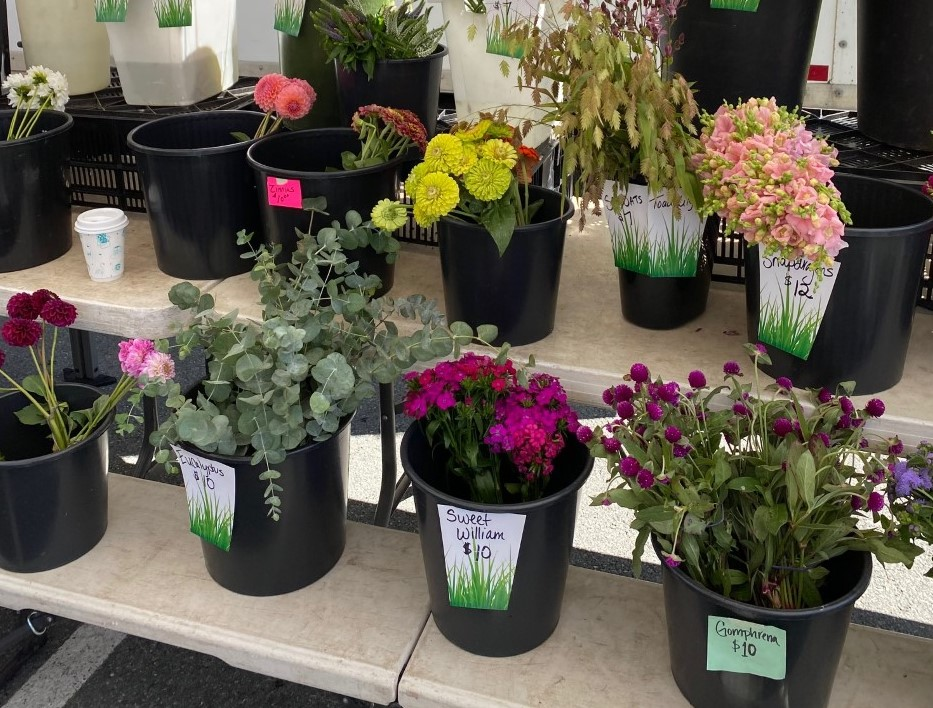 Visit The Elm Team at Bethesda Central Farm Market thumbnail