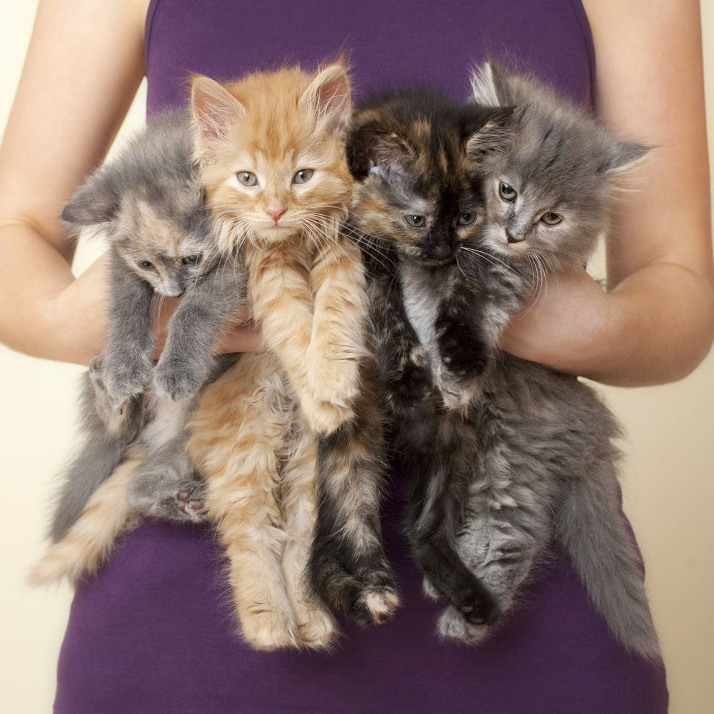 National Kitten Day is July 10! Here's Where To Get a Furry Friend thumbnail